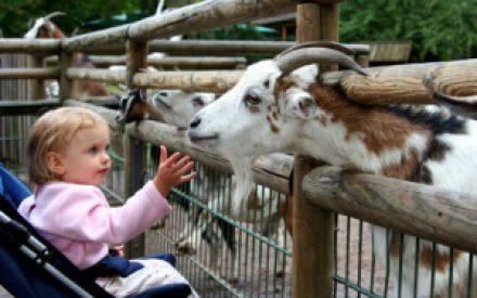 Ausflugsmöglichkeiten für Kinder
