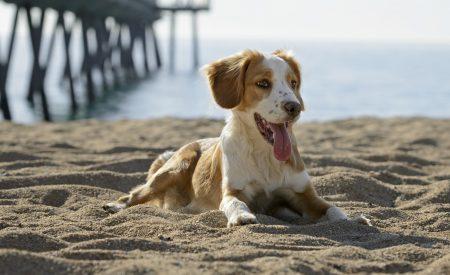 Nordsee-Urlaub mit dem Hund: empfehlenswerte Reiseziele und wertvolle Tipps