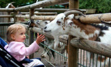 Kinderurlaub, auf was muss geachtet werden?