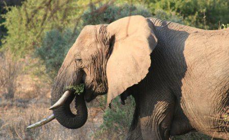 Südafrika – kinderfreundlich auf Safari