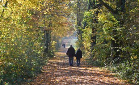 Auf den Spuren eines Heiligen. Wandern im Münsterland: Unterwegs auf dem Baumberger Ludgerusweg