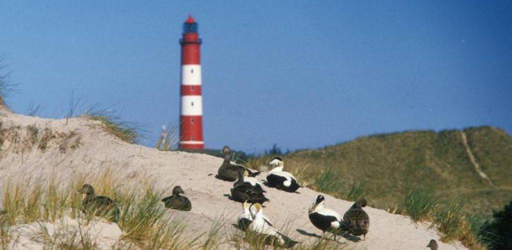Amrum bietet abwechslungsreiche Urlaubserlebnisse am Wattenmeer