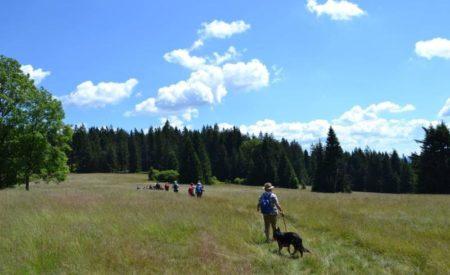 Philippsreut im Bayerischen Wald lädt zum Wanderurlaub mit Haustier ein