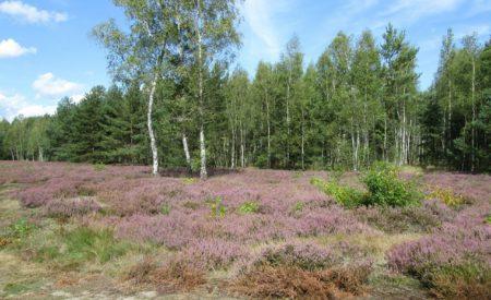 Rostocker Heide: Wo Wald auf Meer trifft
