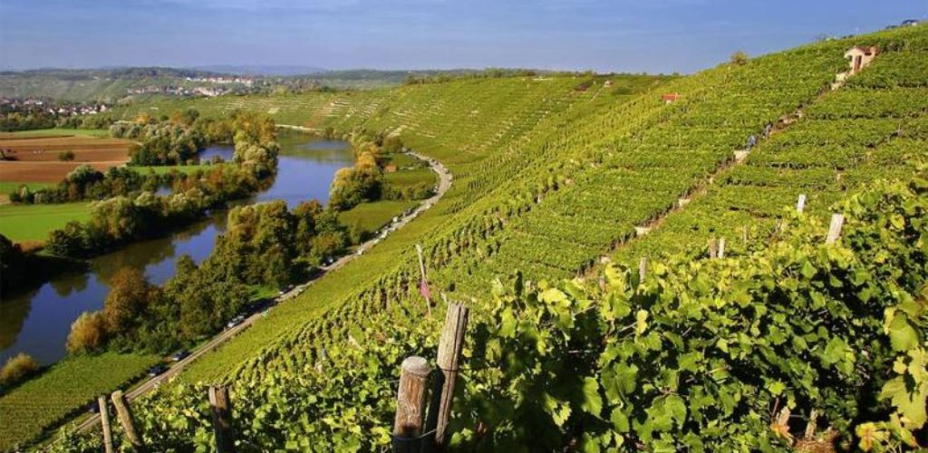 Rendezvous zum Weinwandern