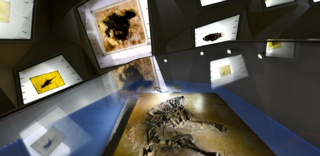 Fossilien-Grube Messel 25 Jahre Welterbe